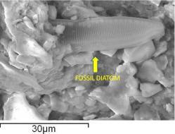 fossilesmeteorite2