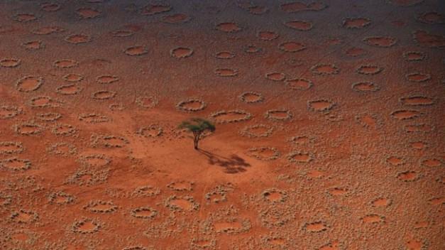 Les Cercles de fées sont impressionnants et peuvent mesurer jusqu'à 50m de diamètre. Un chercheur allemand a réussi à expliquer ce phénomènebegeek.fr