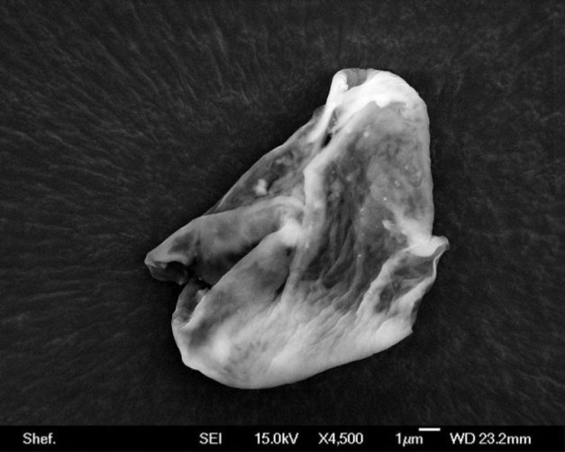Des scientifiques de l'Université de Sheffield affirment trouvé à Wakefield (West Yorkshire) des preuves de vie extraterrestre. Image: Keystone