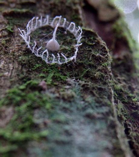 (Crédit photo : Troy Alexander / Tambopata Research Center) Cette étrange formation a été observée pour la toute première fois le 7 juin, en Amazonie péruvienne par Troy Alexander Crédit: gentside